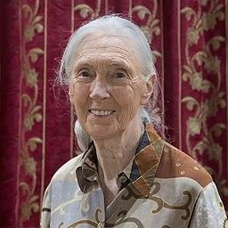 Weltfrauentag Pericosa Blog starke Frauen Jane Goodall